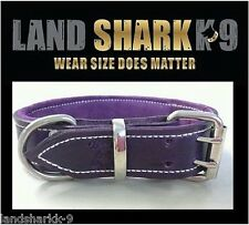 Medium Violet Pure Leather Dog Collar with Soft Purple Suede Padded Lining