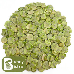 Flaked Peas 100g - 1kg | Dried Peas for Small Animals, Rabbit, Guinea Pig Treats