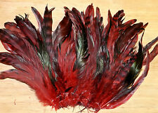 50 DYED RED CHINCHILLA GRIZZLY VARIANT ROOSTER TAIL FEATHERS (6 to 7 inches)