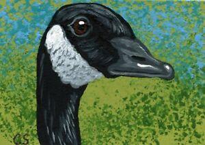 ACEO ATC Original Painting Canada Goose Bird Wildlife Art  -Carla Smale