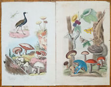 Guerin: Handcolored Print Mushroom 2 Prints (B) - 1838#