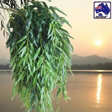 1x Artificial Ivy Leaves Plants Weeping Willow Wedding Salix Decor HVINE6514