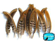 """Pheasant Feathers, 6-8"""" Natural Reeves Venery Tail Feathers - 10 Pieces"""