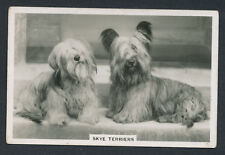 Skye Terriers from series Dogs by Senior Service Cigarettes card #36