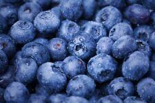 Blueberry 1 Lb Freeze Dried Powder