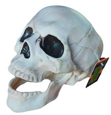 Human Skeleton Skull Halloween New