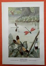 Brasilische Libellen Odonatologie Odonata Insekt Farbdruck 1915