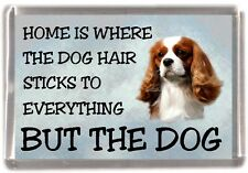 "Cavalier King Charles Dog Fridge Magnet ""Home is Where"" Design No 3 by Starprint"