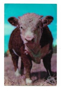 TEXAS I'm a Little Bull But I Can Steer You Right Calf Cow Postcard