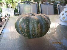 "12 Pumpkin Seeds ""Jap / Kent"" - Grow your own - Fresh is Best -FREE POSTAGE"