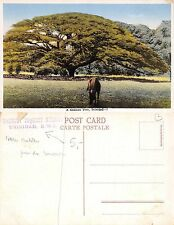 Trinidad - A Samaan Tree WITH STAMP TOURIST INQUIRY BUREAU (A-L 252)