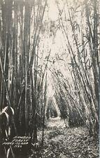 Avery Island LA * Bamboo Forest  RPPC  ca. 1920s? * Iberia Parish  Tabasco Sauce