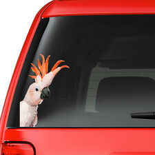 Pink Parrot Cockatoo Colour Vinyl Decal Window Sticker Car Gift Present New