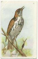 Arm and Hammer Baking Soda, Useful Birds Wood Thrush Victorian Trade Card