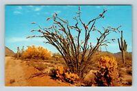 Desert In Bloom, Ocotillo, Saguaro, Chrome Postcard