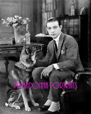 RUDOLPH VALENTINO 8X10 Lab Photo Sexy Young Star & Dog, Silent Era Portrait