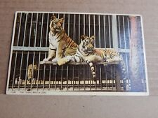 Postcard  Tigers at Bristol Zoo In Cage unposted