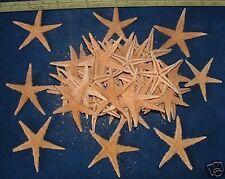 """100+ Tan Starfish 2 - 2 1/2""""+ Star Fish Sea Shell crafts tsf2-100"""