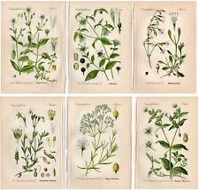 SIX 1904 Antique Prints: WHITE FLOWERS Floral Botanical German Decor Gift THOME