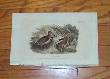 Ackermann Woodcock Plate. 1809. Hand-colored.