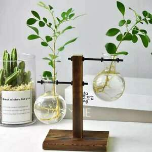 Propagation Vase |2 Glass Vase Hydroponic Desktop Plant Vase Propagation Station