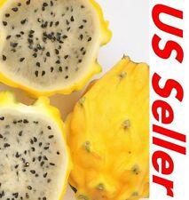 15 Seeds Yellow Sweet Dragon Fruit E66, pitahaya Hylocereus Megalanthus Seeds