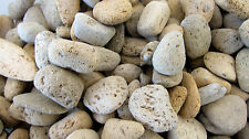 *3* Pumice Beige Gray Volcanic Rock 20-40mm QTY3 Healing Crystal Negativity