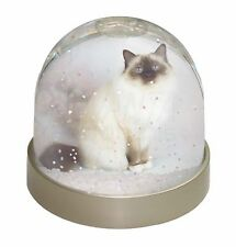 AC-56GL Cute Fluffy Kittens Photo Snow Globe Waterball Stocking Filler Gift