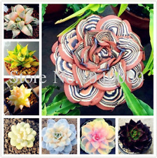100 Pcs Seeds African Mixed Garden Cactus Succulent Plant Tree Purify Air Bonsai