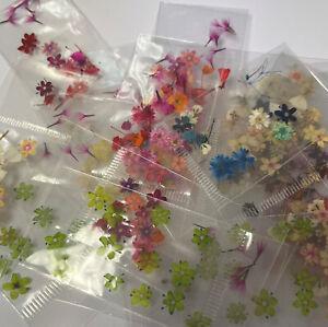 Dry dried flowers nail art nails naturaleza muerta para uñas 5 Bags Assorted
