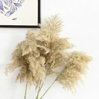 pampas grass decor plants home wedding decor dried flowers bunch feather flowers
