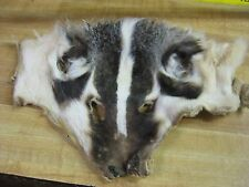 "Fur Faces "" BADGER "" Trapping Fur Coats # 2 &  3 Grade  DAMAGED"