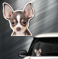 (1) CHIHUAHUA DOG Peeper Sticker Window Peep Decal Car Auto Puppy AKC 3.75x3.5