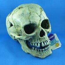 Kazoo Skull Large Aquarium Ornament