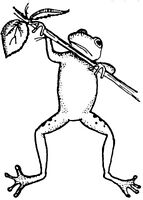 Unmounted Rubber Stamps, Frog, Frog Stamps, Frogs, Nature Stamps, Hanging Frogs