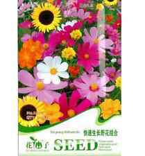 Fast Growing Wildflower Mix colorful Seeds ~1 Pack 200 Seeds~ Free Ship