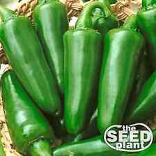 Tam Jalapeno Seeds 150 SEEDS NON-GMO