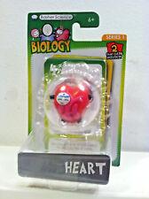 Basher Science Biology Heart Figure.