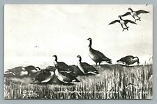 """""""Canadian Honkers in Michigan"""" RPPC Canada Goose—Vintage LL Cook 1940s"""