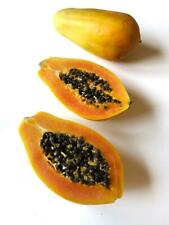 CARICA PAPAYA CV SOLO AUTOFERTILE 10 SEMI - produce frutti anche senza maschio