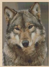 Counted Cross Stitch Wolf - COMPLETE KIT - No.2-425/1 KIT