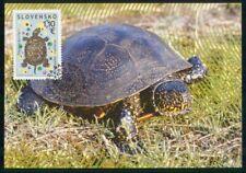MayfairStamps Czechoslovakia 2009 Turtle Fauna Post Card wwk57105