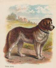 EARLY NEWFOUNDLAND DOG ANTIQUE LITHOGRAPH ART PRINT 1899
