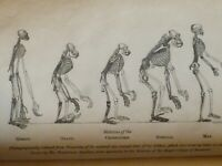 """1863 EVOLUTION – THOMAS HENRY HUXLEY – """"EVIDENCE OF MAN'S PLACE IN NATURE"""""""