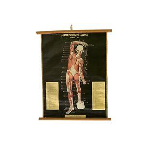 Original Anatomy Pull Down Chart, Vintage Educational Map, Anatomy Poster