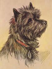 CAIRN TERRIER CHARMING DOG GREETINGS NOTE CARD BEAUTIFUL HEAD STUDY