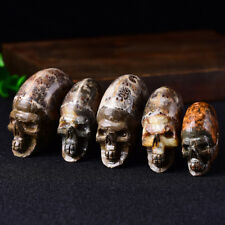 Rare Natural Conch Ammonite Fossil Hand Carved  Polished Crystal Skull 1Pcs