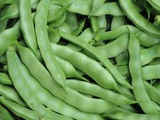 Green Bean Snap / Shell LAZY WIFE Delicious Productive Organic Heirloom  Seeds
