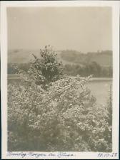 Allemagne, Feuillage, 14 octobre 1928, vintage silver print Vintage silver print