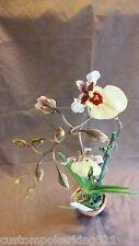 Tolumnia Orchid, Lv103, Rdcm Spunky X Spring Bouquet, in 2.5 clay pot